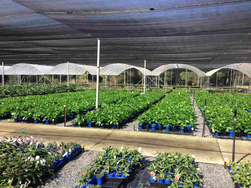 greenlife structures 8 metre habitat greenhouse