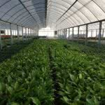 greenlife structures multi span greenhouse