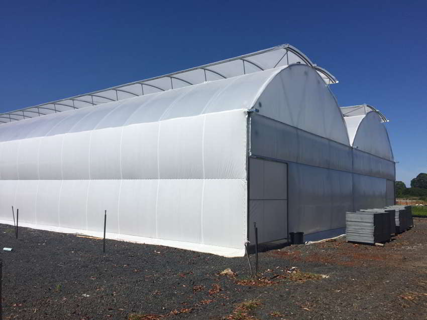 Multi Span Greenhouse Greenlife Structures