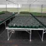 greenlife structures greenhouse rolling bench