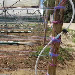 Trellis twine - installation example using both colours